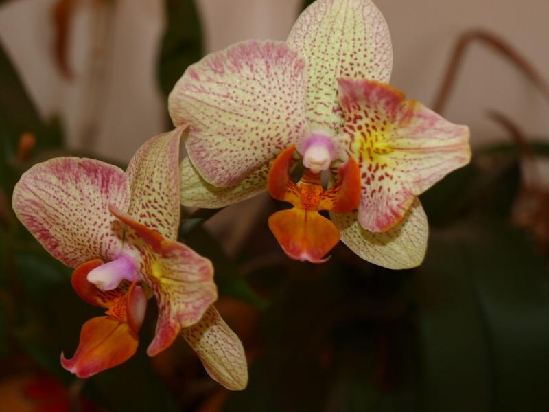 Exposition d'orchidées à Paris - Page 2 Photo_23