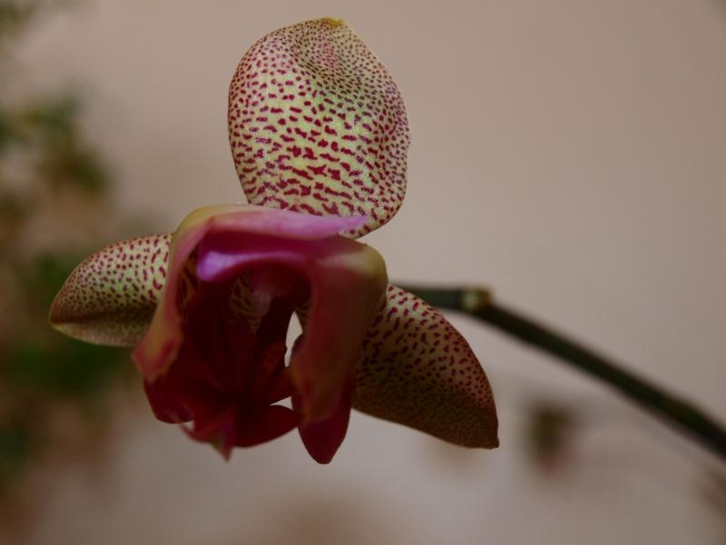 Exposition d'orchidées à Paris - Page 2 Photo_24