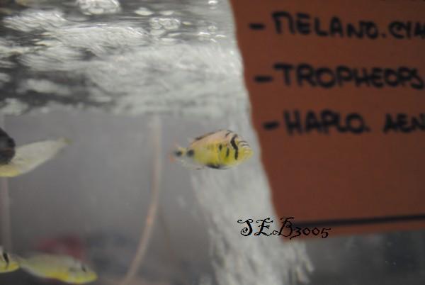 Compte rendu bourse Arlon 2010 Dsc_0038