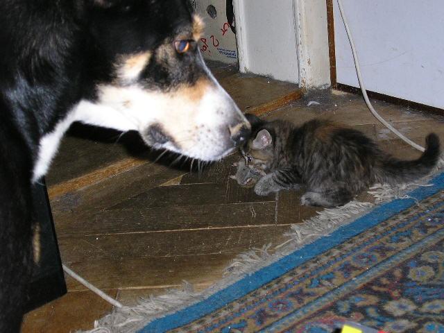 Dora et ses chats P1010410