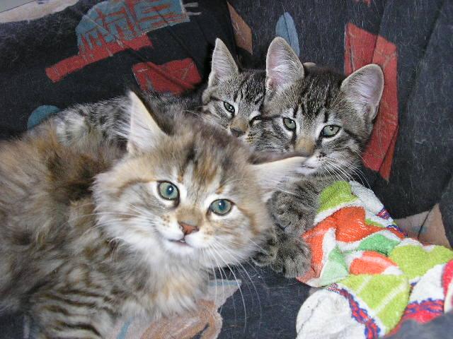 Dora et ses chats P1010412