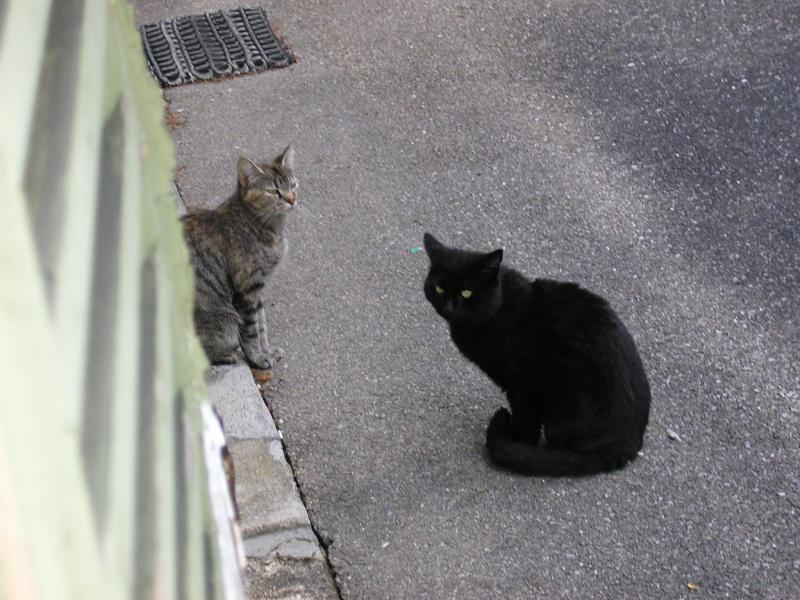 Dora et ses chats P1010512