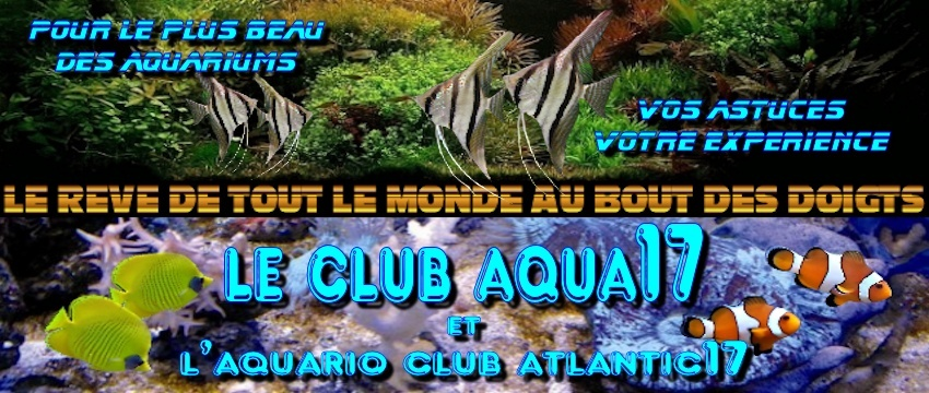 Le forum du Club Aqua 17 et de l'Aquarioclub Atlantic 17