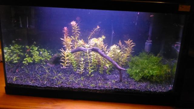 mon petit aquarium Dsc_1820