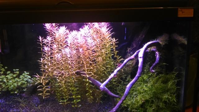 mon petit aquarium Dsc_1821