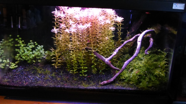 mon petit aquarium Dsc_1823
