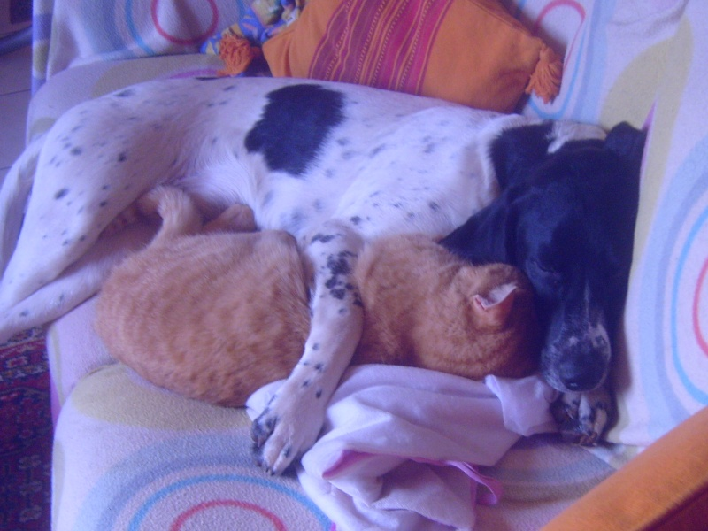 mes chiens S7003312