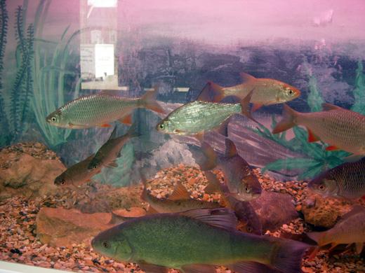 Salon de la pêche à FLAVY LE MARTEL le 17 avril 2010 Dscn7217