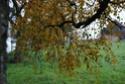 Thème du mois de Novembre : Les couleurs de l'Automne Dsc_3310