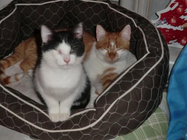CHAUSSETTE (ex. NUFAR), chaton de 7 mois tapé par une voiture trouvé dans la rue (Pascani) - adopté par Déborah (39) - décédé Cimg5811