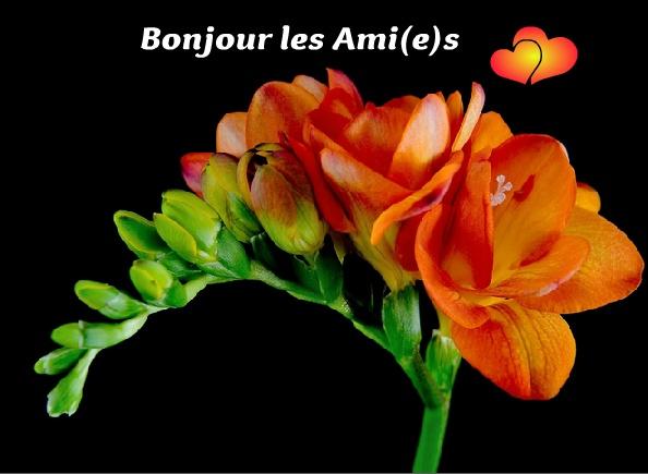 Bonjour - Page 3 Bonjou12