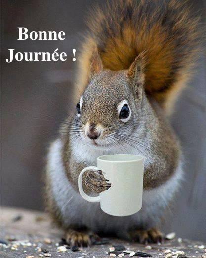 Bonjour Bonne-10