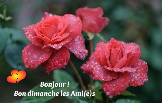 Bonjour - Page 3 Dimanc11