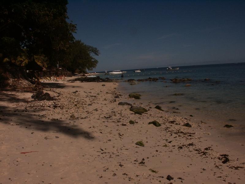 Fleurs et plages de l'Île Maurice Azle_p11