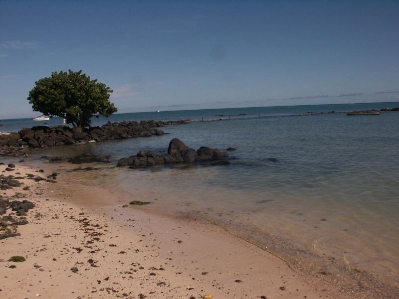 Fleurs et plages de l'Île Maurice Azle_p12
