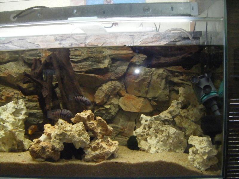 Quel Fond Pour Votre Aquarium