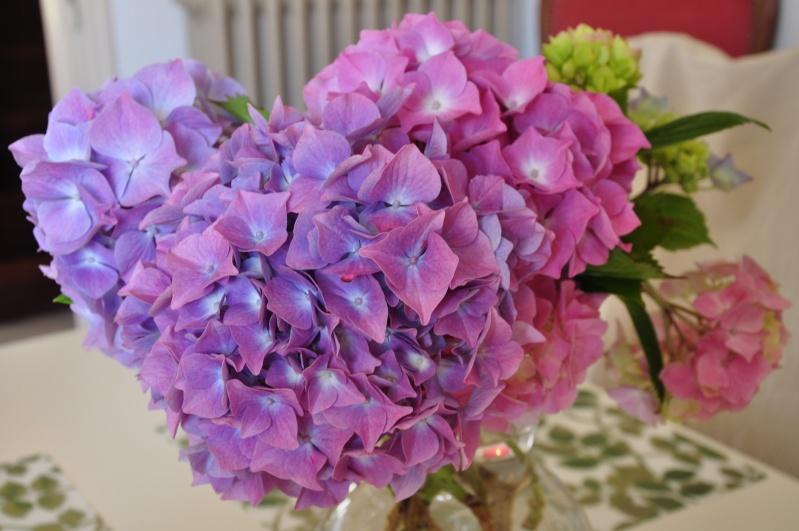 fleurs en vrac! - Page 13 Dsc_0011
