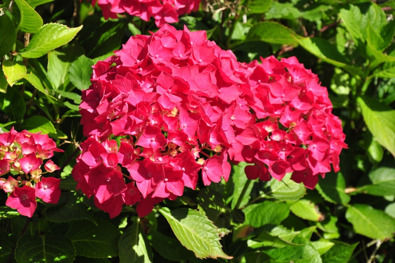 fleurs en vrac! - Page 13 Dsc_0311