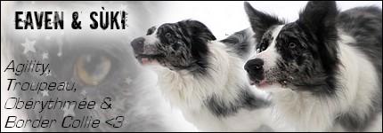 BLANC - [Adopté] Banjo Border Collie noir et blanc de 2 ans et demi (SPA de Verviers-Belgique) Sans_124