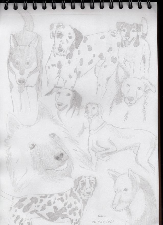 Galerie de Janis - Page 2 Chiens10