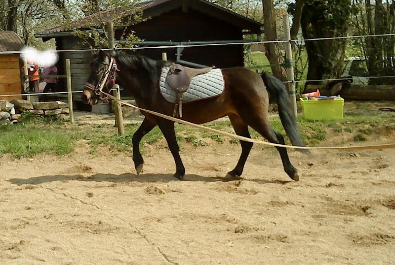 SIDONIE - ONC Poney née en 2006 - adoptée en septembre 2010  Dsc06613