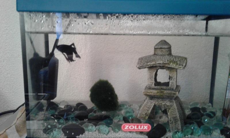 Nettoyage aquarium + chauffage  20160110