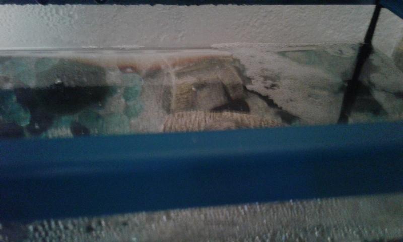 Nettoyage aquarium + chauffage  20160111