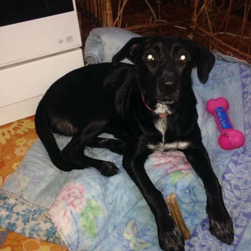 Besoin d'aide pour une très jeune chienne trouvée - cherche asso Tia10