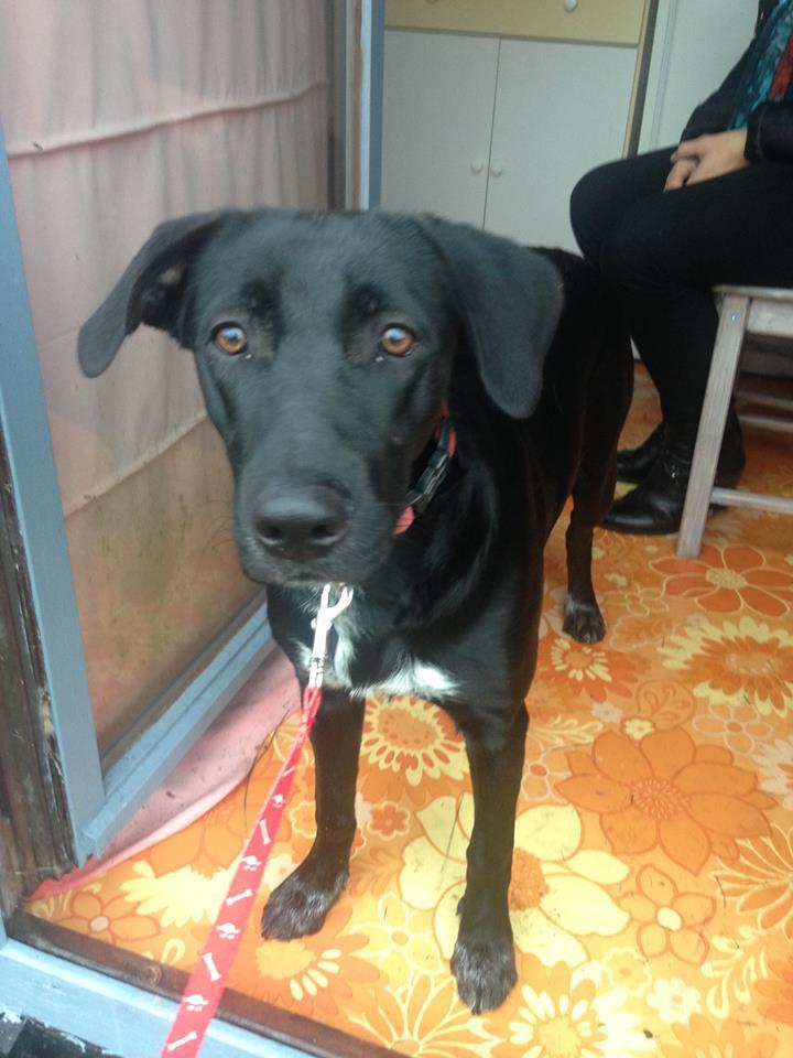 Besoin d'aide pour une très jeune chienne trouvée - cherche asso Tia_210
