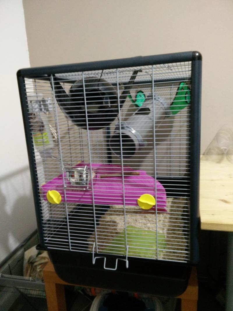 Avis et conseils sur ma cage Img_2017