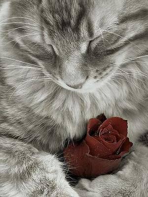 8 août : Journée internarionale du chat — le chat dans toute sa beauté - Page 3 2hnj5g10