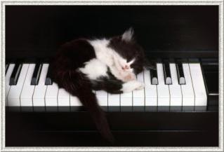 8 août : Journée internarionale du chat — le chat dans toute sa beauté - Page 3 Apu-4-10