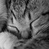 8 août : Journée internarionale du chat — le chat dans toute sa beauté - Page 3 Avatar11