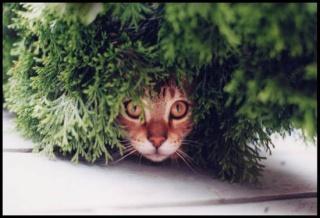 8 août : Journée internarionale du chat — le chat dans toute sa beauté - Page 3 Fke6za10