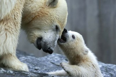 Les ours Image10