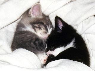 8 août : Journée internarionale du chat — le chat dans toute sa beauté - Page 3 Tdtsyw10