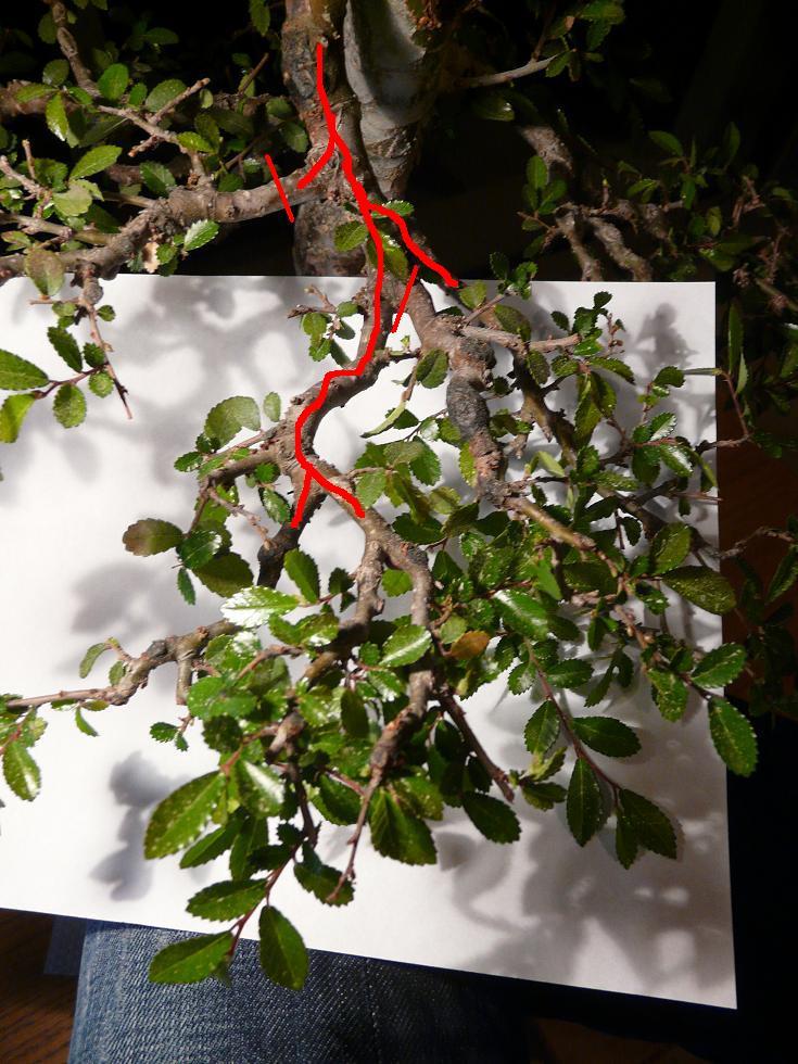 travail sur un orme Branch12
