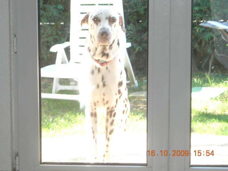 urgent pour youck dalmatien de 6 ans Youk_013