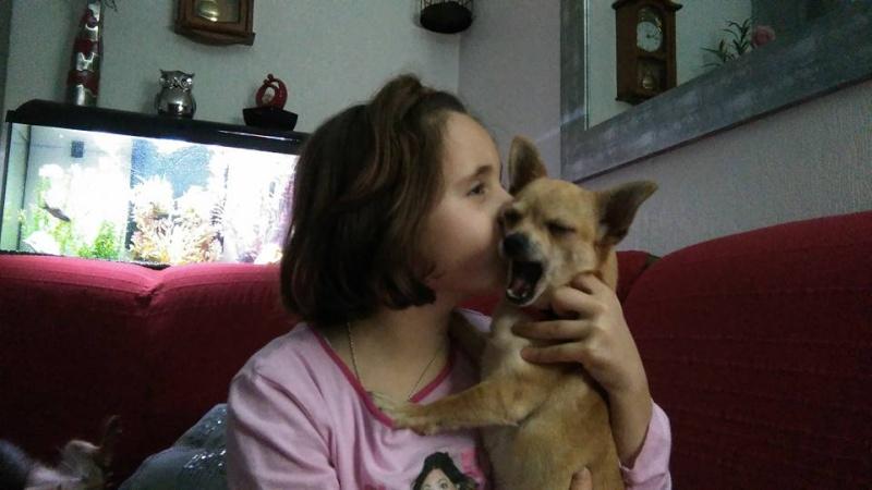 "2 petites chihuahuas à l'adoption ""Scooby France"" - DAISY ADOPTÉE SCOOBY FRANCE Daisy_13"