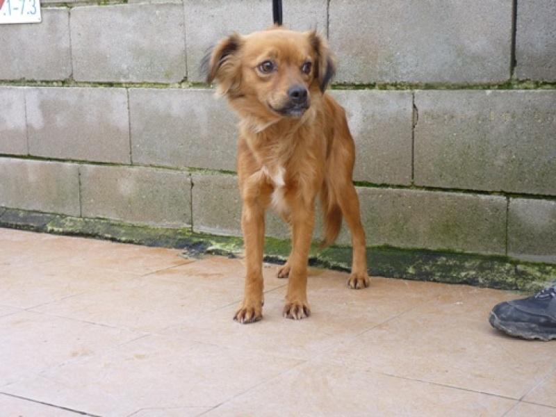 niki petite croisée à l'adoption Adoptée  Niki410