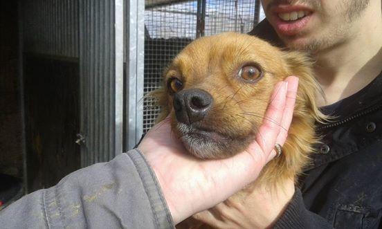 niki petite croisée à l'adoption Adoptée  Niki_310