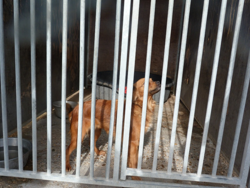 niki petite croisée à l'adoption Adoptée  P5970910