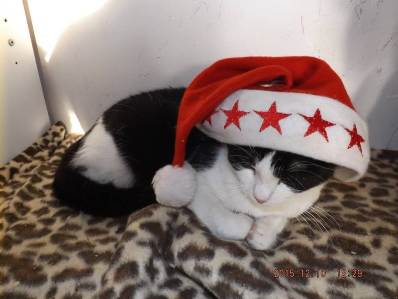 PEEPO, chat noir et blanc  Peepo10