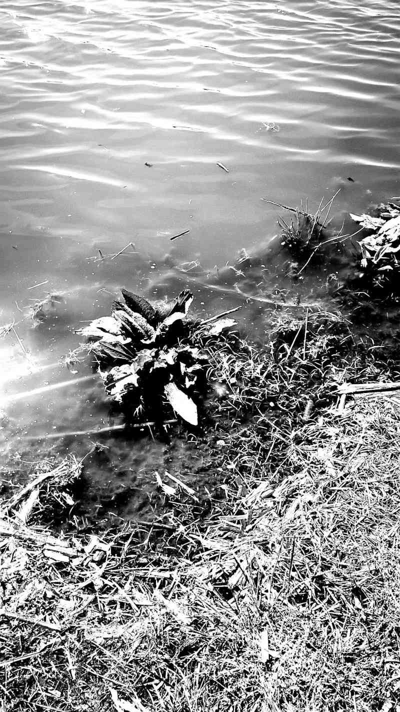 Photo divers ( par MissMo) Image41