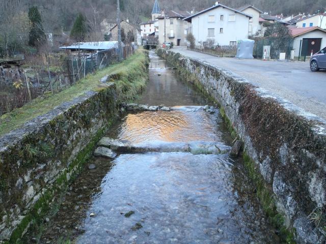 albarine - Frayère de l'Albarine  Pc190013