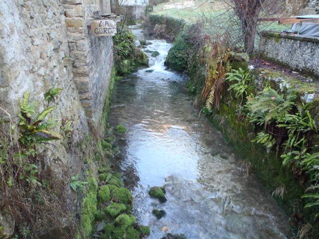 albarine - Frayère de l'Albarine  Pc190014