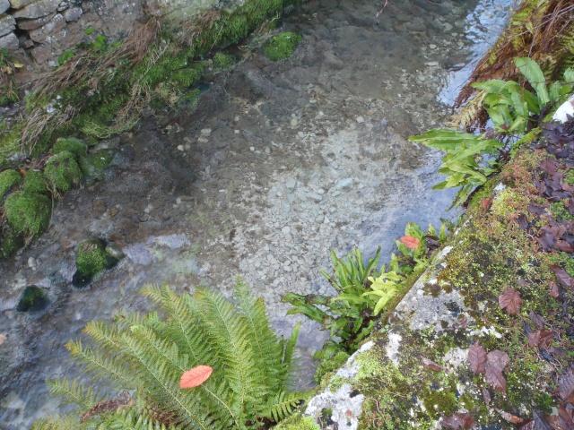 albarine - Frayère de l'Albarine  Pc190015