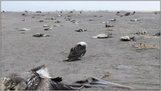 Japon : explosion à la centrale nucléaire de Fukushima - Page 19 16c-se10