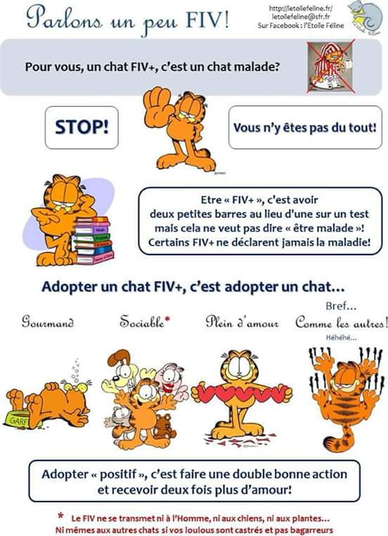 LE FIV Fiv10