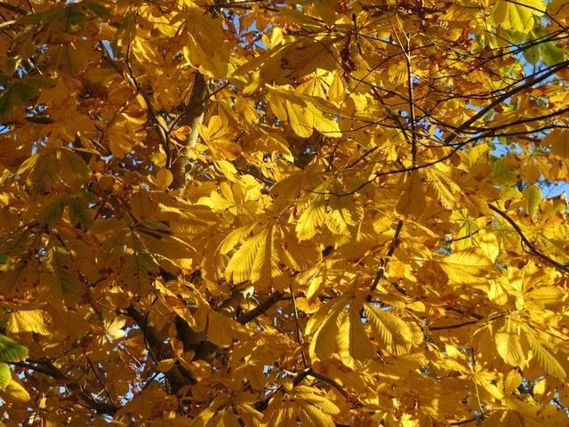 """Concours photos..........""""L'automne"""" !!! 5img_112"""